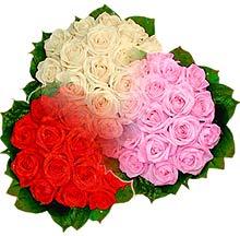 3 renkte gül seven sever   Kastamonu çiçek , çiçekçi , çiçekçilik