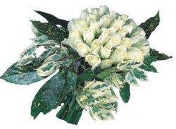 Kastamonu internetten çiçek siparişi  9 Beyaz gül Özel kisiler için