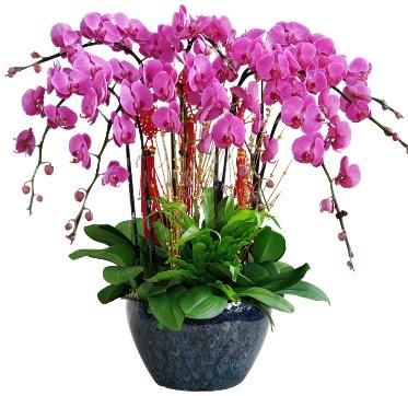 9 dallı mor orkide  Kastamonu 14 şubat sevgililer günü çiçek