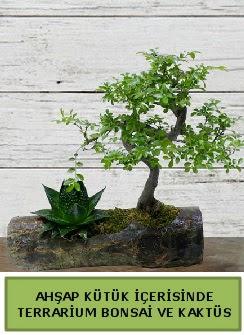 Ahşap kütük bonsai kaktüs teraryum  Kastamonu internetten çiçek siparişi