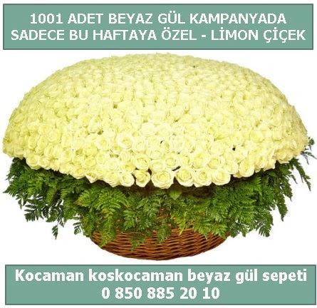 1001 adet beyaz gül sepeti özel kampanyada  Kastamonu çiçek gönderme sitemiz güvenlidir