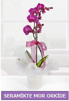 Seramik içerisinde birinci kalite tek dallı mor orkide  Kastamonu İnternetten çiçek siparişi