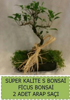 Ficus S Bonsai ve arap saçı  Kastamonu çiçekçi telefonları