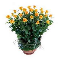 Kastamonu cicekciler , cicek siparisi  10 adet sari gül tanzim cam yada mika vazoda çiçek