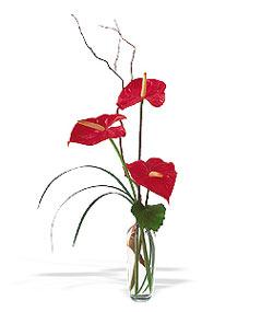 Kastamonu çiçek siparişi sitesi  cam yada mika Vazoda 3 adet  antoryum