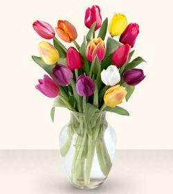 Kastamonu çiçekçiler  13 adet cam yada mika vazoda laleler