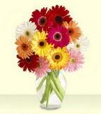 Kastamonu çiçek yolla , çiçek gönder , çiçekçi   cam yada mika vazoda 15 özel gerbera