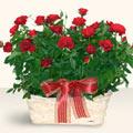 Kastamonu İnternetten çiçek siparişi  11 adet kirmizi gül sepette