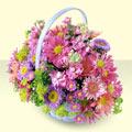 Kastamonu yurtiçi ve yurtdışı çiçek siparişi  bir sepet dolusu kir çiçegi  Kastamonu çiçek gönderme sitemiz güvenlidir