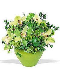 cam yada mika vazoda 5 adet orkide   Kastamonu online çiçekçi , çiçek siparişi
