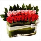 12 adet kirmizi gül ve cam   Kastamonu çiçekçi mağazası