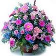 karisik mevsim kir çiçekleri  Kastamonu çiçek gönderme sitemiz güvenlidir