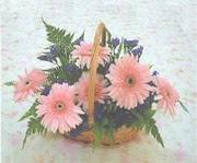 gerbera çiçeklerinde sepet   Kastamonu çiçek yolla