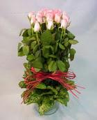 13 adet pembe gül silindirde   Kastamonu çiçek yolla