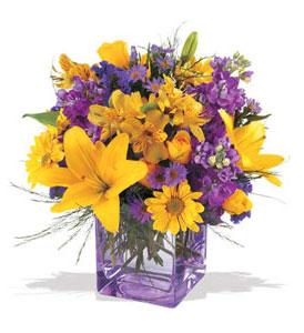 Kastamonu çiçek mağazası , çiçekçi adresleri  cam içerisinde kir çiçekleri demeti