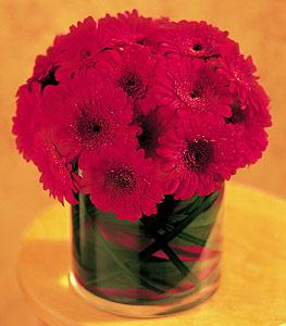 Kastamonu ucuz çiçek gönder  23 adet gerbera çiçegi sade ve sik cam içerisinde