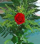 1 adet kirmizi gül buketi   Kastamonu çiçek siparişi vermek