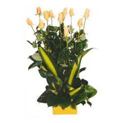 12 adet beyaz gül aranjmani  Kastamonu kaliteli taze ve ucuz çiçekler