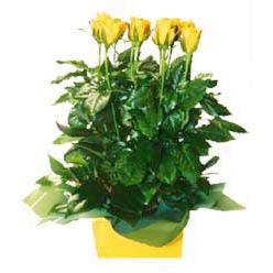 11 adet sari gül aranjmani  Kastamonu online çiçekçi , çiçek siparişi