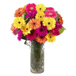 KARISIK GERBERALARDAN CAM VAZO TANZIMI  Kastamonu güvenli kaliteli hızlı çiçek