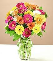 Kastamonu çiçek online çiçek siparişi  17 adet karisik gerbera