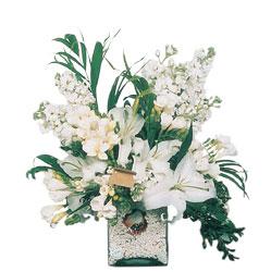 Kastamonu internetten çiçek siparişi  sadece beyazlardan olusmus mevsim cam yada mika tanzim
