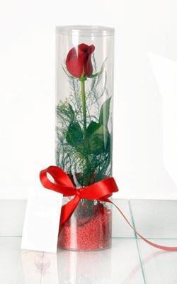 Kastamonu çiçek yolla  Silindir vazoda tek kirmizi gül