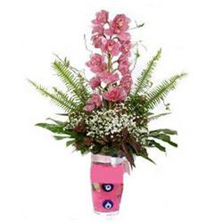 Kastamonu hediye çiçek yolla  cam yada mika vazo içerisinde tek dal orkide çiçegi