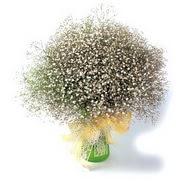 Kastamonu çiçek mağazası , çiçekçi adresleri  cam yada mika vazo içerisinde cipsofilya demeti