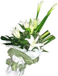 Kastamonu güvenli kaliteli hızlı çiçek  3 dal kazablanka çiçegi ve yesillikler