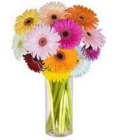 Kastamonu internetten çiçek siparişi  Farkli renklerde 15 adet gerbera çiçegi