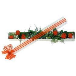 Kastamonu çiçek siparişi sitesi  6 adet kirmizi gül kutu içerisinde