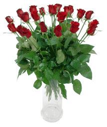 Kastamonu çiçekçi telefonları  11 adet kimizi gülün ihtisami cam yada mika vazo modeli
