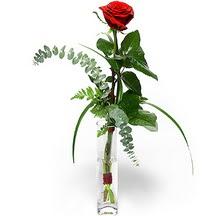 Kastamonu 14 şubat sevgililer günü çiçek  Sana deger veriyorum bir adet gül cam yada mika vazoda