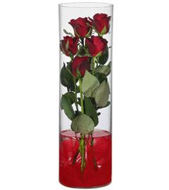 cam içerisinde 7 adet kirmizi gül  Kastamonu çiçekçiler