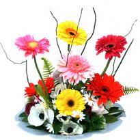 Kastamonu hediye çiçek yolla  camda gerbera ve mis kokulu kir çiçekleri