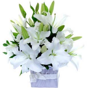 Kastamonu çiçek yolla  2 dal cazablanca vazo çiçeği