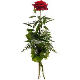 Kastamonu online çiçekçi , çiçek siparişi  1 adet kırmızı gülden buket