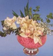 Kastamonu çiçek mağazası , çiçekçi adresleri  Dal orkide kalite bir hediye