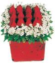 Kastamonu çiçek gönderme  Kare cam yada mika içinde kirmizi güller - anneler günü seçimi özel çiçek