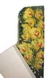 Kastamonu çiçek gönderme  Kutu içerisine dal cymbidium orkide