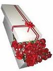 Kastamonu çiçekçi telefonları  11 adet 1.kalite magnum güller