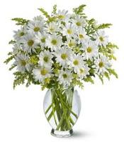 Vazo içerisinde beyaz krizantem çiçekleri  Kastamonu çiçekçi mağazası