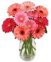 vazo içerisinde 13 adet gerbera çiçeği  Kastamonu çiçek siparişi sitesi