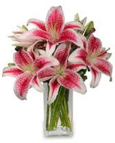 Vazo içerisinde 5 dal kazablanka çiçeği  Kastamonu cicekciler , cicek siparisi