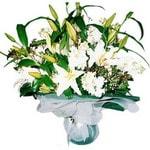 Kastamonu çiçekçi mağazası  Kazablanka ve gerbera demeti