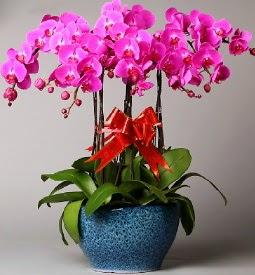 7 dallı mor orkide  Kastamonu çiçek online çiçek siparişi
