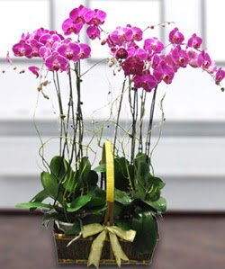 4 dallı mor orkide  Kastamonu güvenli kaliteli hızlı çiçek