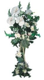 Kastamonu çiçek mağazası , çiçekçi adresleri  antoryumlarin büyüsü özel