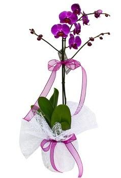 Tek dallı mor orkide  Kastamonu çiçekçi telefonları